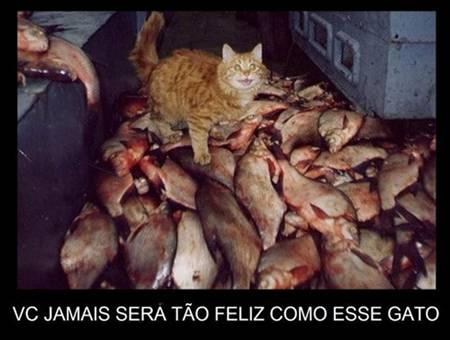 Desmotivacionais, Humor, Gatos, OGatoNinja.blogspot.com