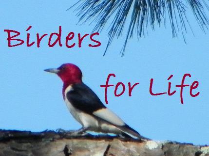 Birders for Life