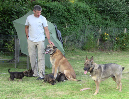 Two adult German shepherds, puppies and Paul in the garden