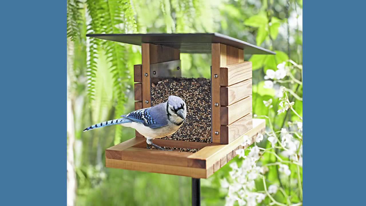 Bird in everything birdhouse feeder plans for Build a house online free