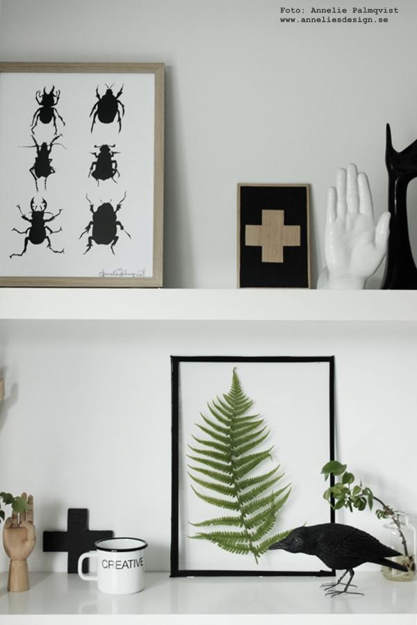 diy tavla med växter, tavla med skalbaggar, skalbagge, svart och vitt, svartvit tavla, poster, posters, konsttryck, ormbunke, ormbunkar, korp, webbutik, webbutiker med inredning, inredningsdetaljer, i hyllan, vitt, svart och vitt, svartvit, svartvita, blogg,