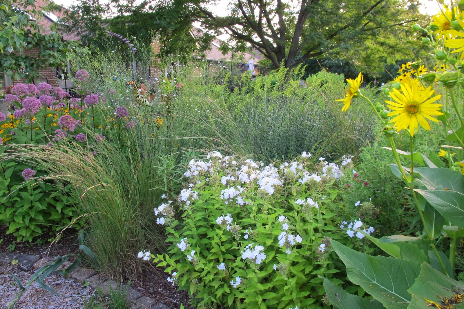 Garden in august in a garden - The Big Yellow Flowers Are Cup Plant Silphium Perfoliatum It Has Large Leaves And Can Be A Bit Of A My Garden I M Taking Over Flower So I Hear