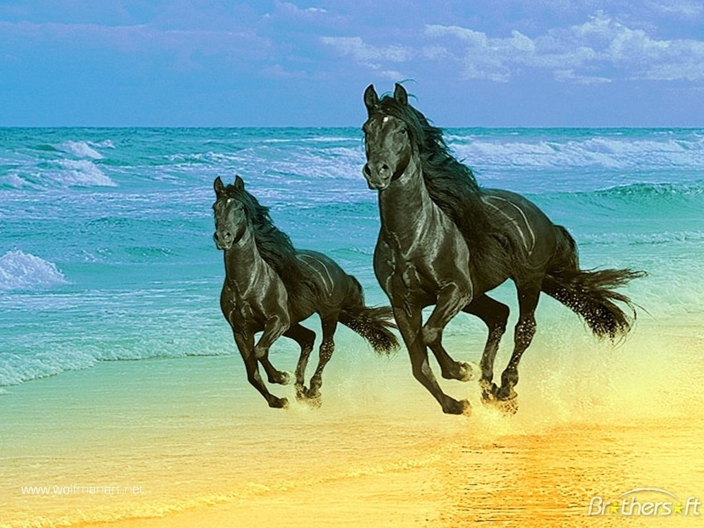 wallpaper gallery beautiful horse wallpaper 5
