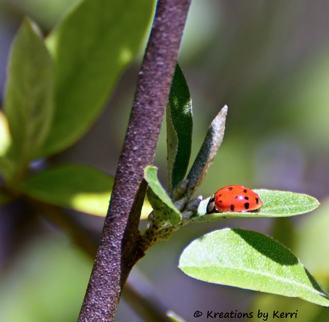 Ladybug in the Leaves