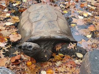 tortoise in water