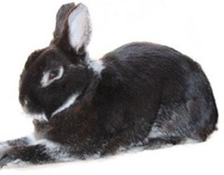Perché scegliere un coniglio nano o domestico da adottare