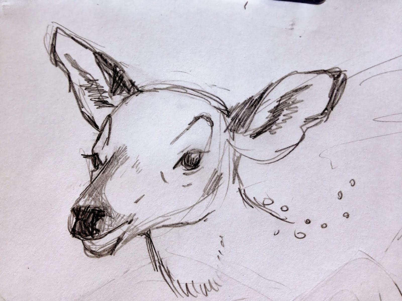 Line Drawing Deer : Best deer sketches images sketch animal