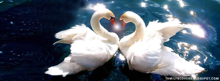 My India Fb Covers Two Swans Symbol Of Love Animal Fb Cover