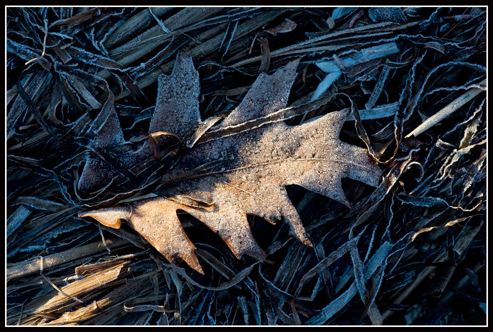 Nova Scotia; Indian Path; Ice; Ice Crystals; Frost; Grass