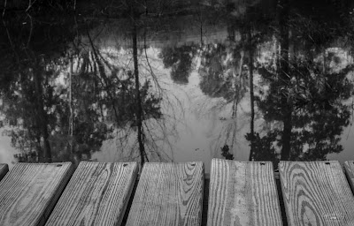 reflection of trees in a pond from the side of a dock