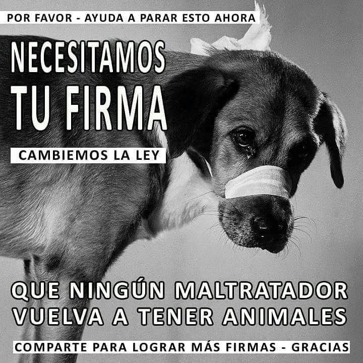 FIRMA para la inhabilitación definitiva de los condenados por maltrato animal