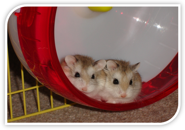 How to Take Care of a Hamster: August 2011