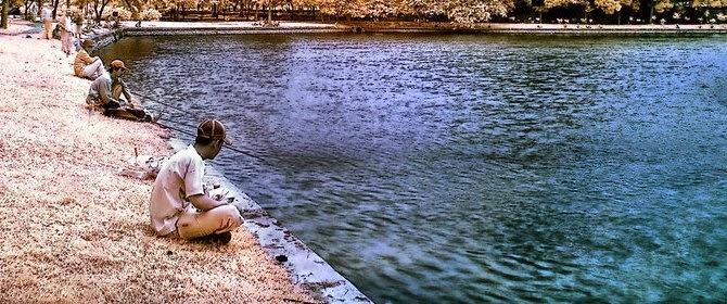 Ikan Jelawat Sungai Seruyan