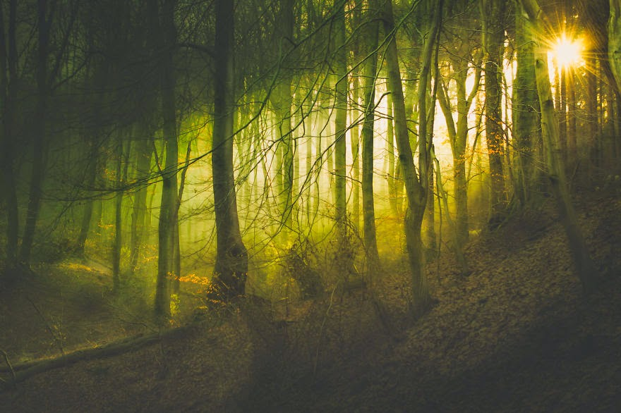 mysterious forests around the world-17