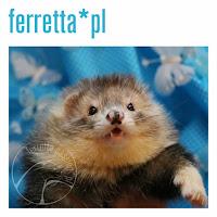 Ferretta.pl