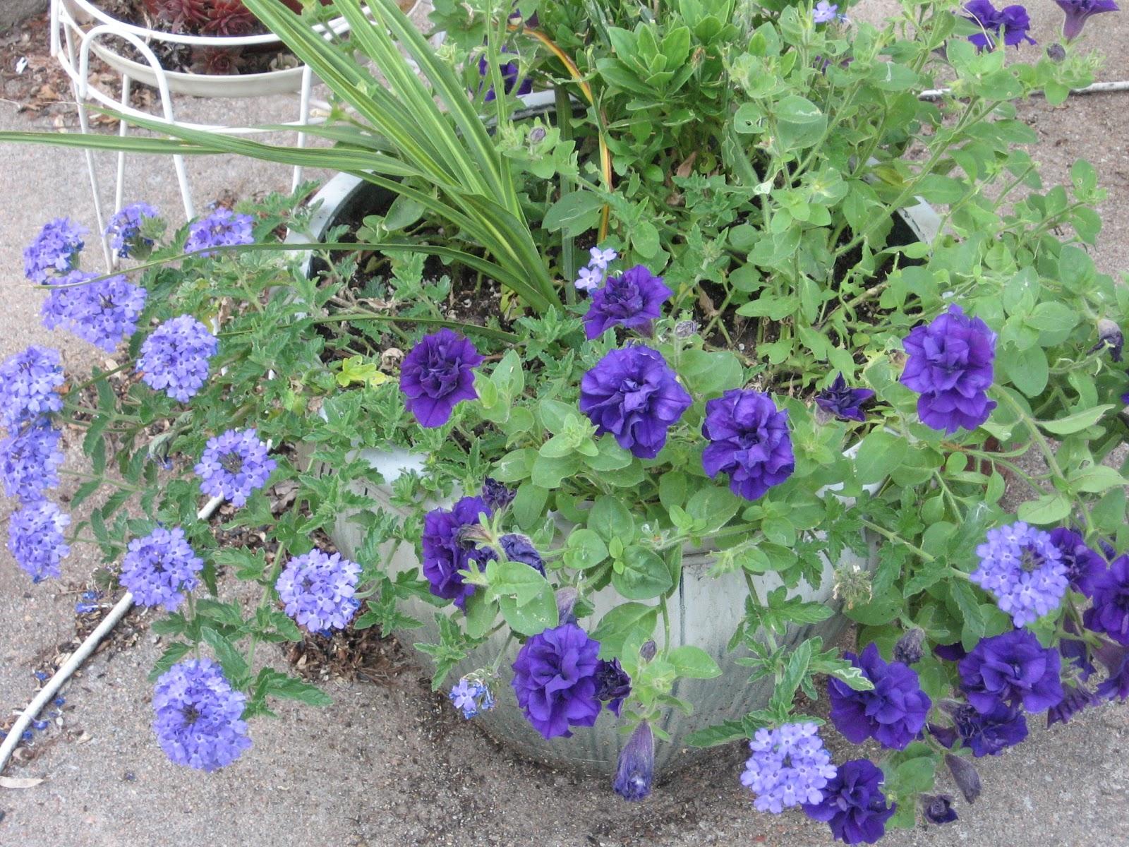 Kansas gardener container gardening pots and soil - Best soil for container gardening ...