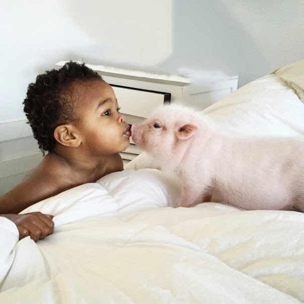 Meet Libby and her pet piglet Pearl - The Heartmelting Friendship Of A 2-Year-Old Girl And Her Piglet
