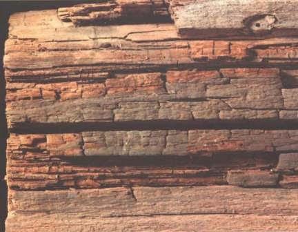 jamur pengurai kayu