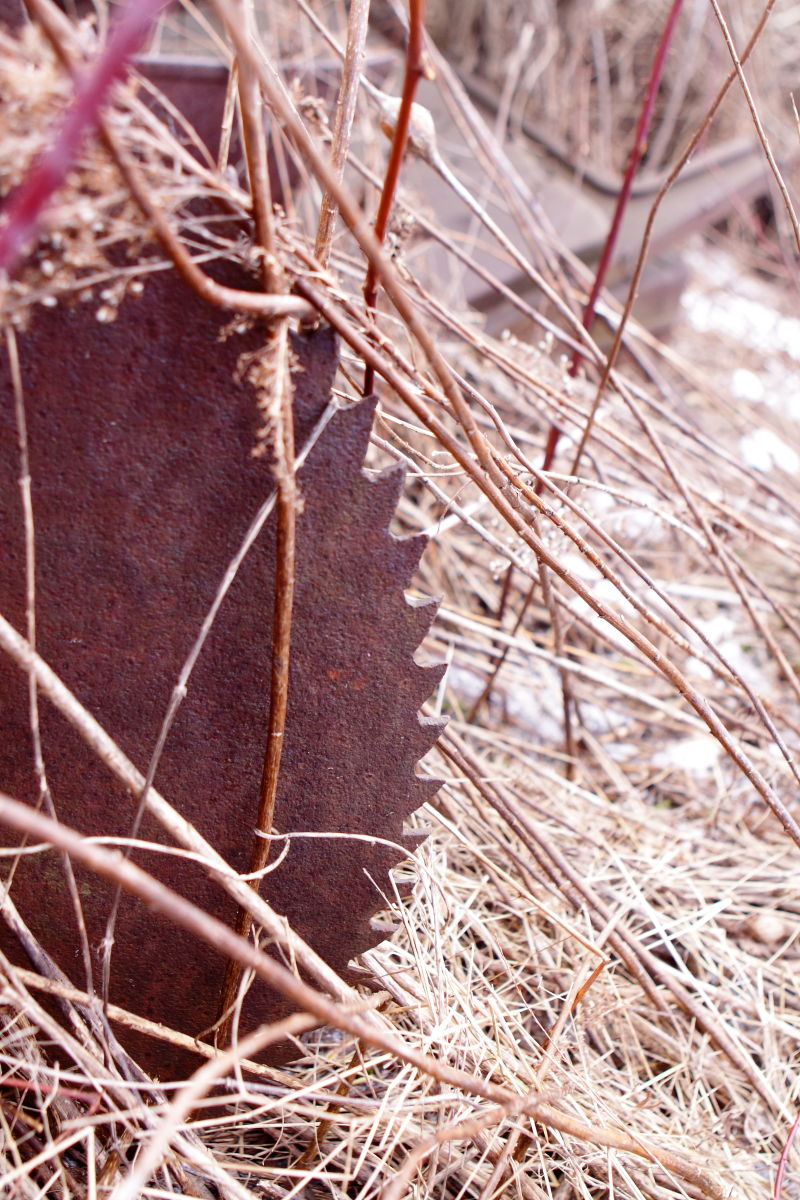 Ornamental Grasses Upstate Ny : Dana s finger lakes pix cleaned the camera card