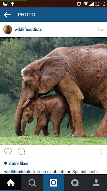 gajah dan anaknya, wildlife,