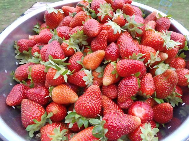 Pick'em and Preserve'm Strawberries