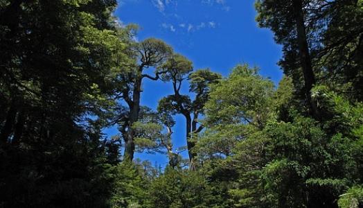 Hora 25 Forestal El Bosque Andino Patagonico
