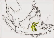 knobbed hornbill Rhyticeros cassidix