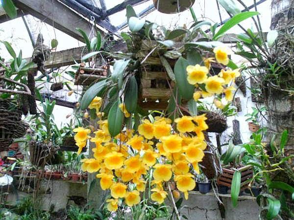 Em Cabo Frio IV Festival de Orquídeas é atração do final de semana