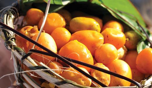 Cajà: dal Brasile, la frutta del benessere