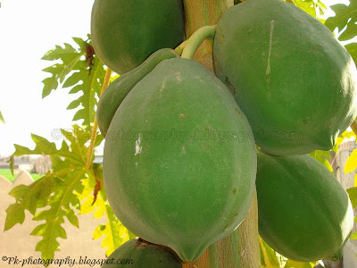 Green Papaya Fruit