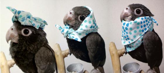 foto papagaio de lenço