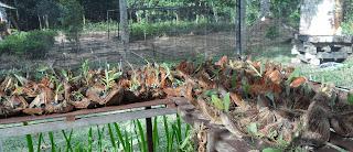 bahaya tanin pada sabut kelapa