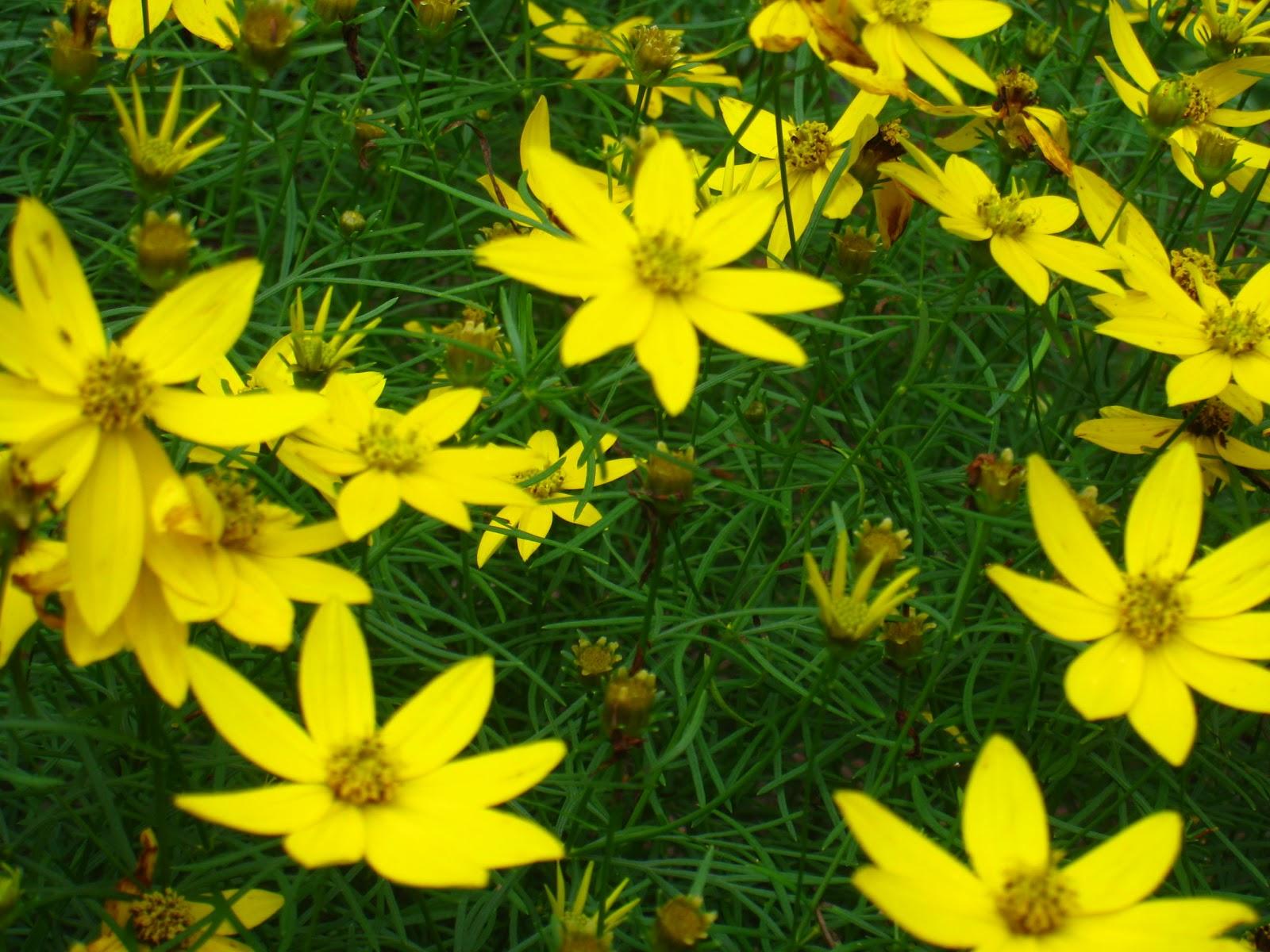 Top Perennials In 2011 Schmalz Landscaping
