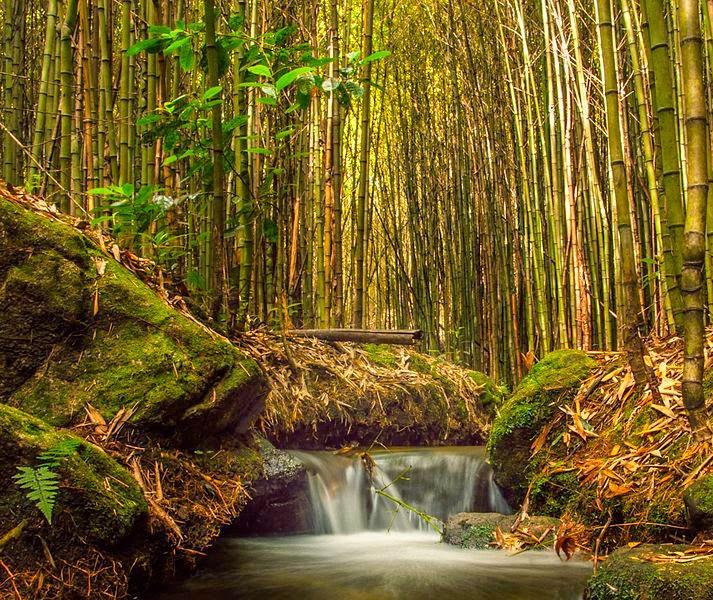 Imagens da Natureza