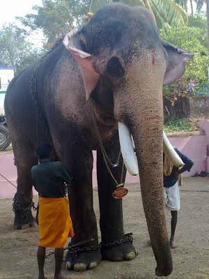 thechikottukavu ramachandran|Kerala Elephents|Thrissur Elephents|Kerala Tourism|Thrissur Tourism|Thrissur pooram|eye images