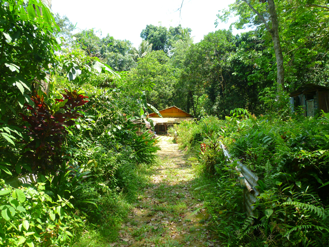 Naturaleza abundante y frondosa