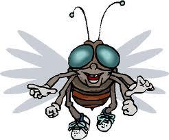 Tentang Lalat