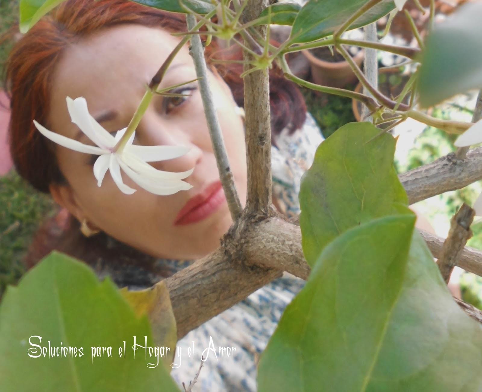 Flor Jazmín Poema Cuanto Sabe la Flor