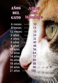 Correspondencia de edades del gato con las personas