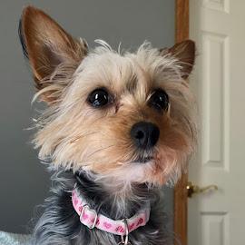 My Puppy Mocha...