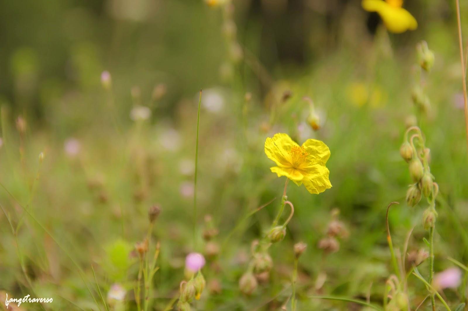 Flore des Alpes, Savoie, Termignon