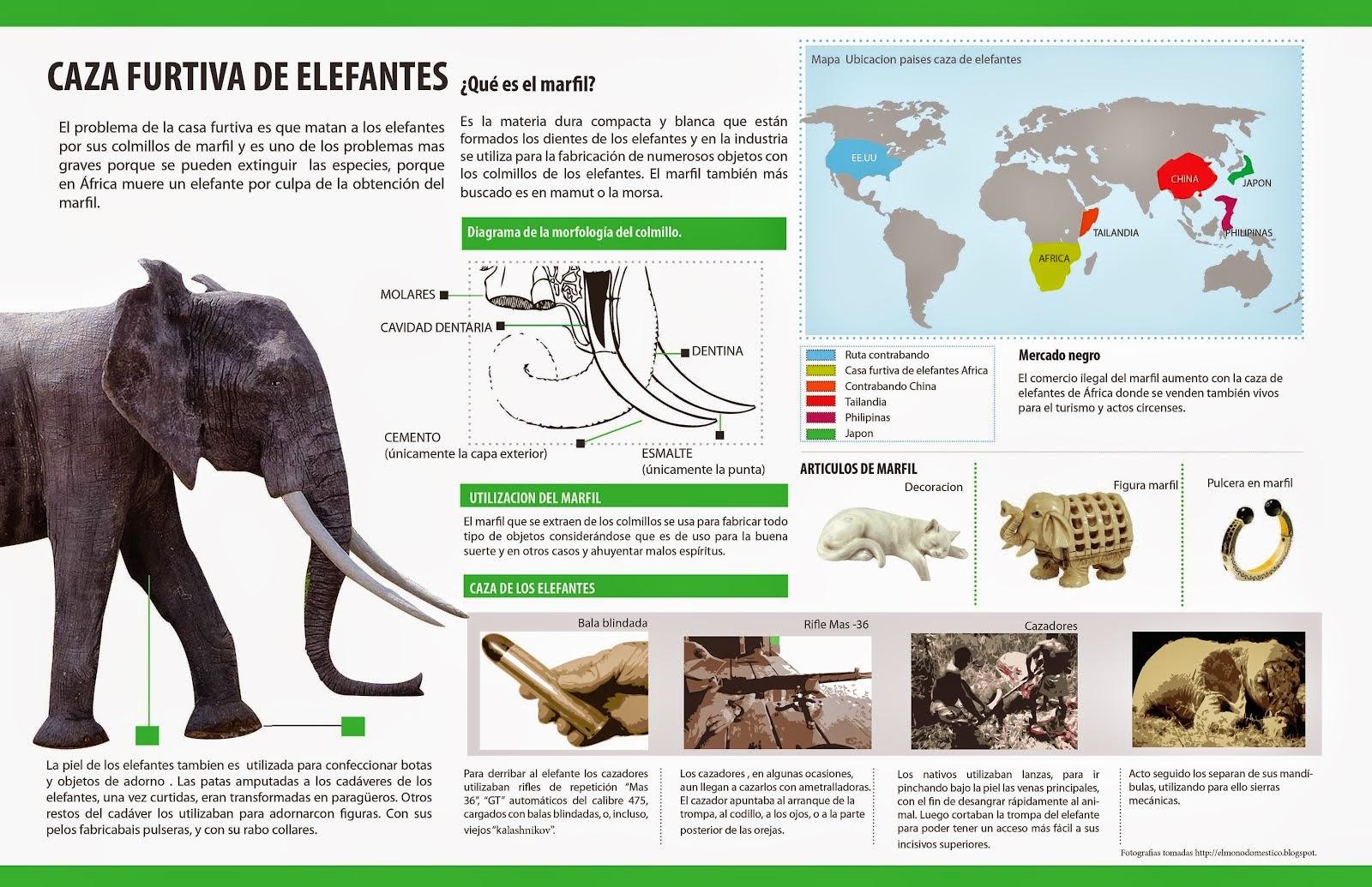 Info animales: INFORME ESPECIAL ELEFANTE AFRICANO