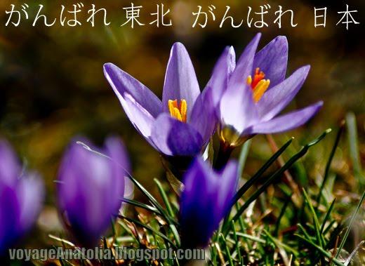 Praising Life in Spring