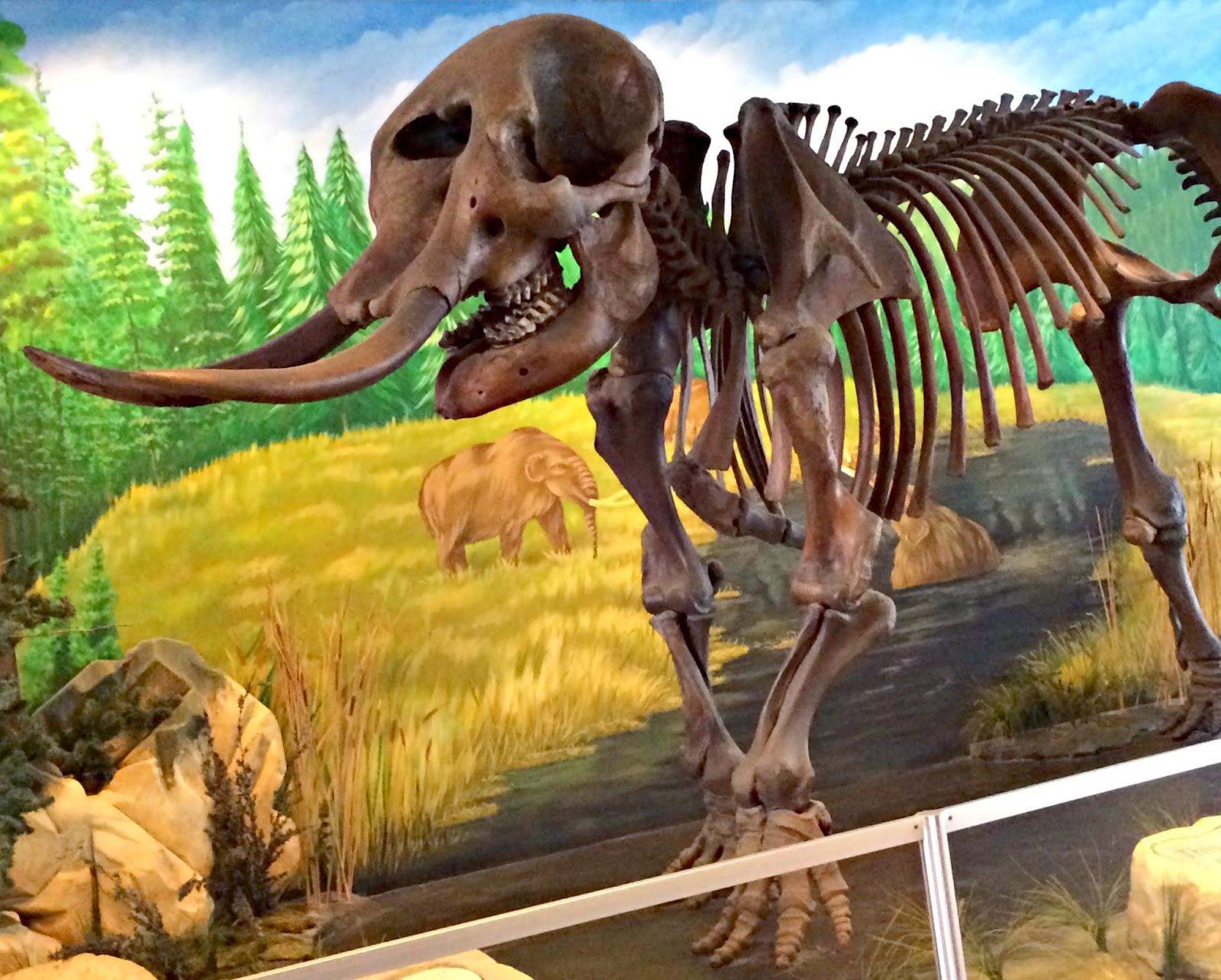 Dinosaur Exhibit Dark Room