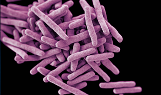 Over-The-Counter Drug Fight Tuberculosis