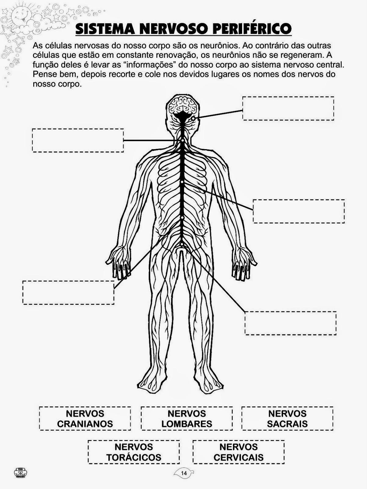 Populares Atividades da Tia Liu: Atividades de ciências 8 ano sistema nervoso ME15