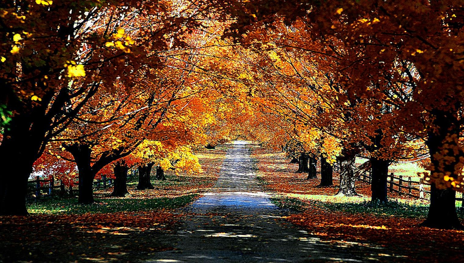 Walls4Joy Autumn paths trees desktop and mobile background