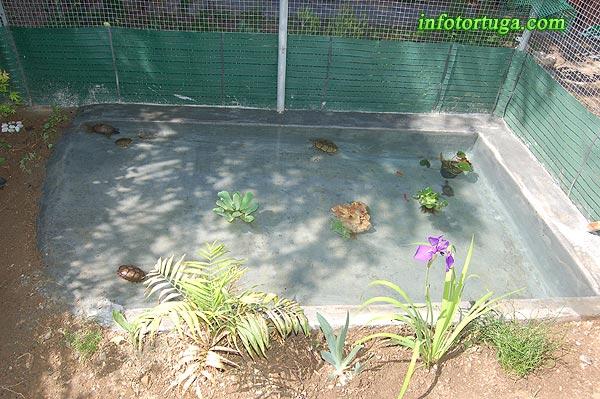 Un zoo en casa instalaciones para kinosternon y sternotherus - Estanque para tortugas ...