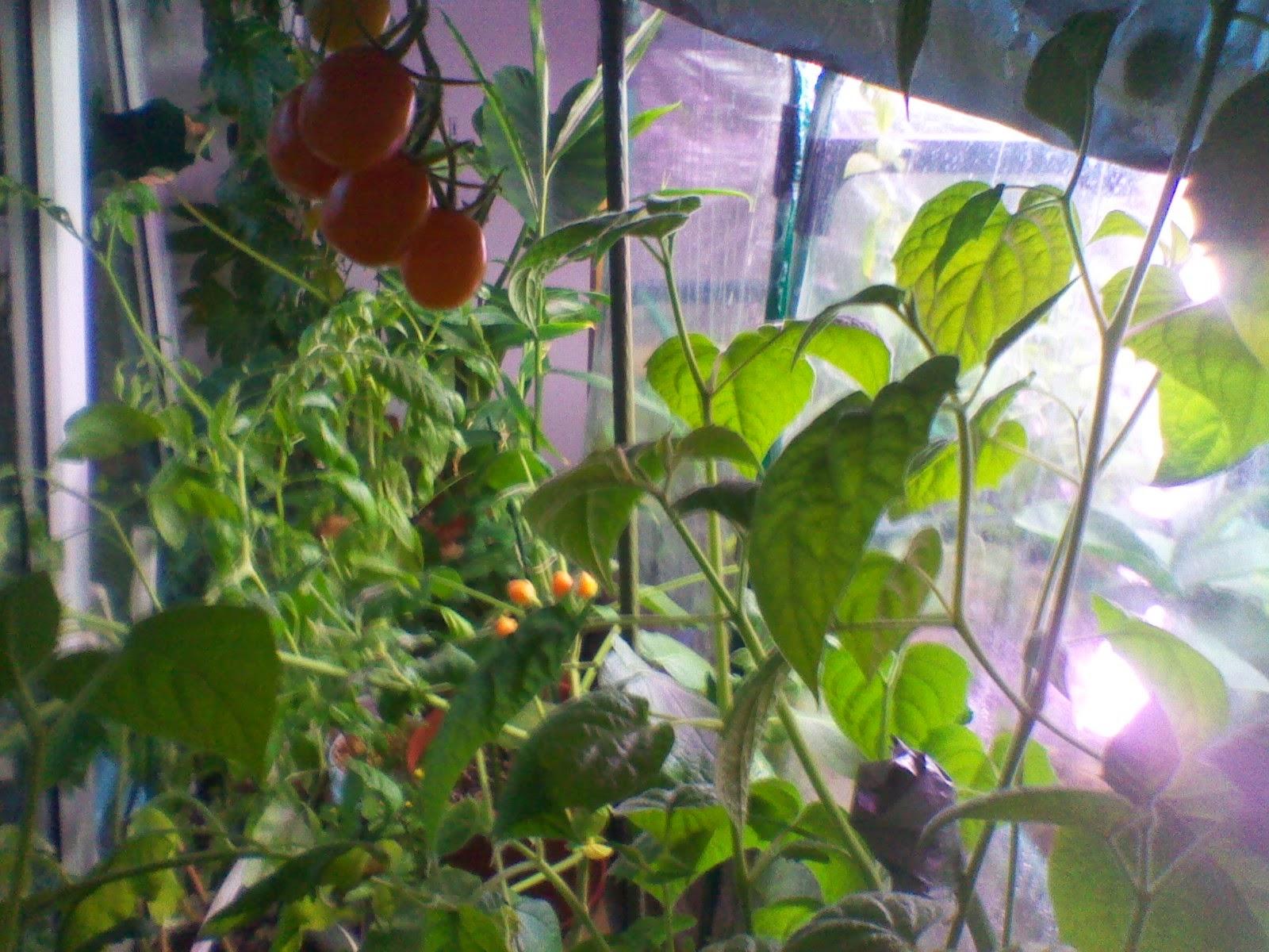Selbstversorgung exotische einheimische pflanzen im zimmer und garten oktober 2014 - Einheimische pflanzen im garten ...