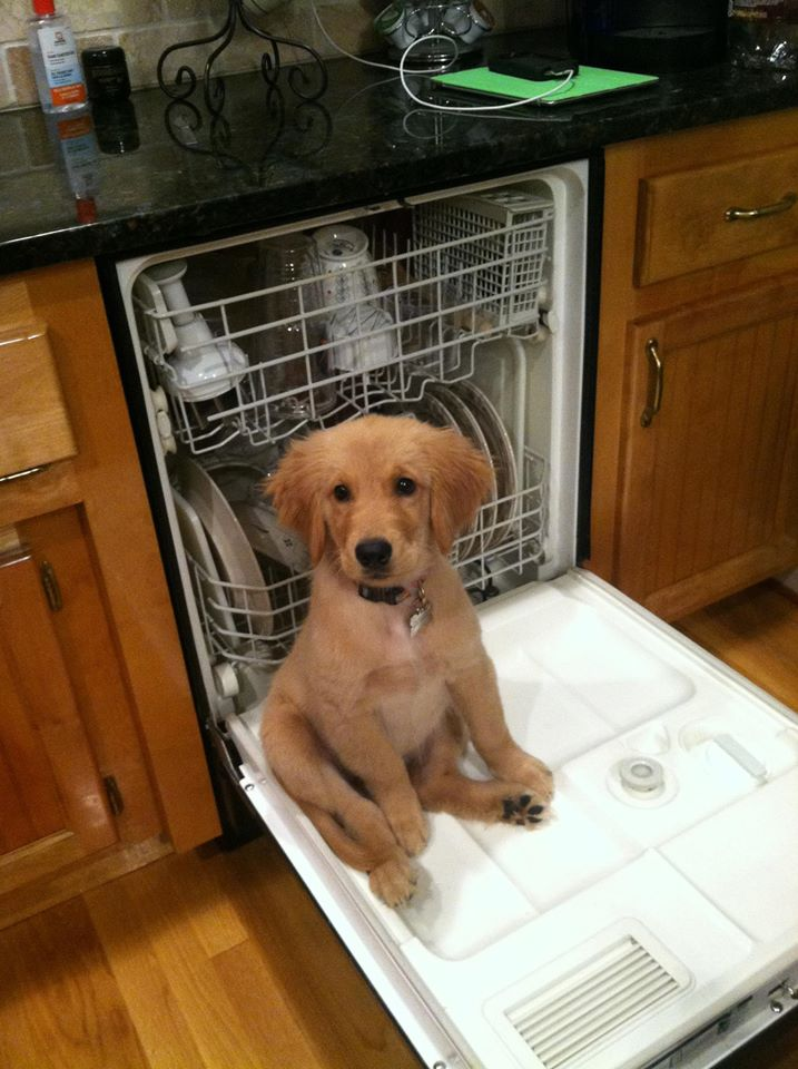 Cute dogs - part 81, best dog photos, best funny dogs, cute dog pictures